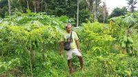 A farmer in his garden